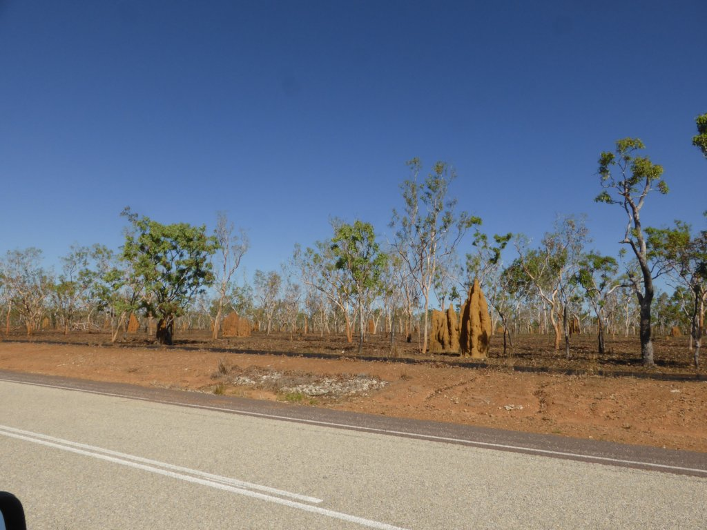 Kakadu termite mounds! Also note the rather dry (and burnt) forest....