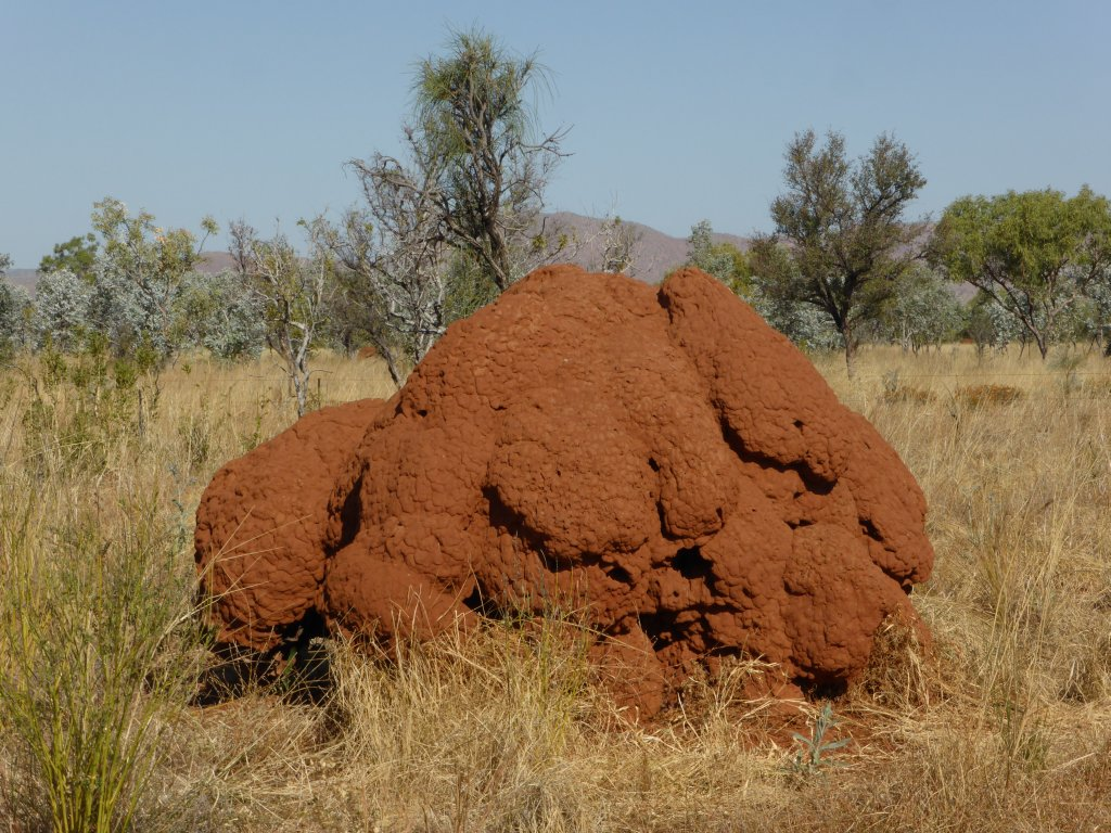 The brain termite mound.