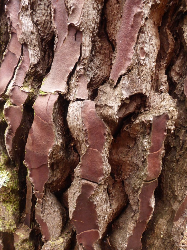 I liked the colour and pattern in this bark