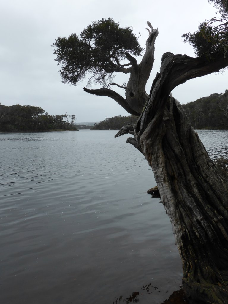 Looking up Nornalup Inlet, towards Walpole. Bleak weather - this is a full colour photo!!!