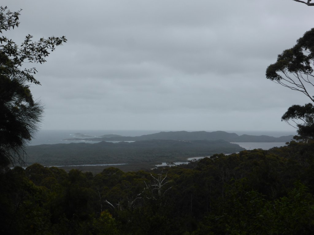 view from a lookout on way up to the Giant Tingle Tree.