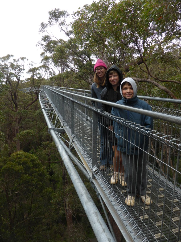 mid way (high point) in the tree top walk.