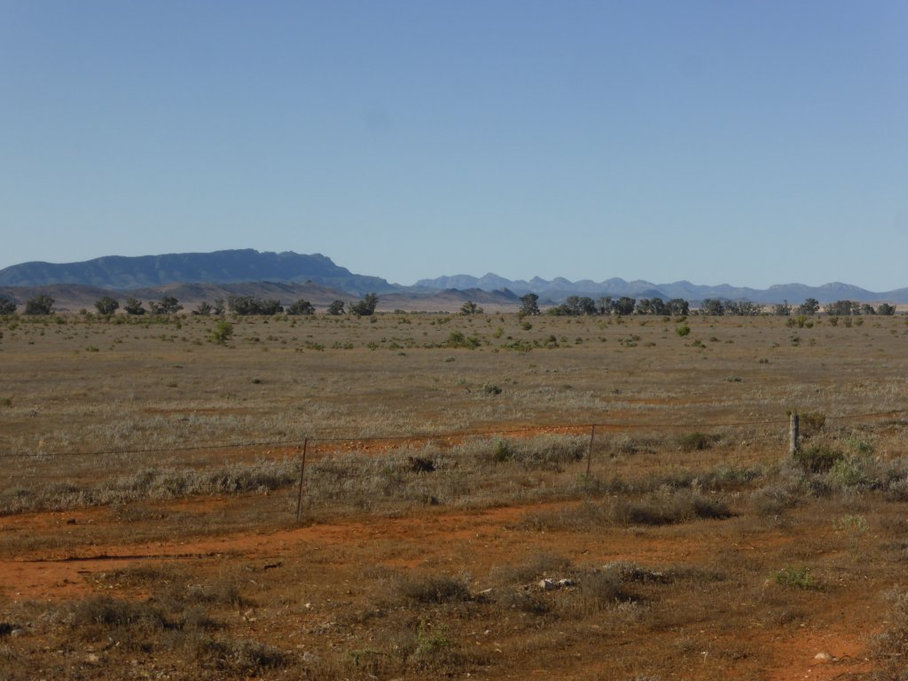 Flinders Ranges (from atop the range already)