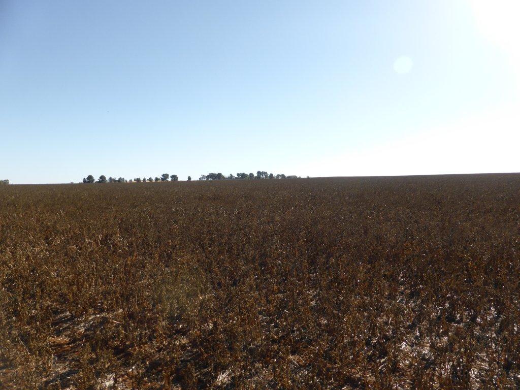 unknown crop