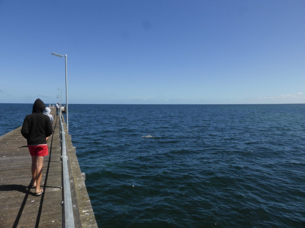 out on the jetty, watching a dolphin