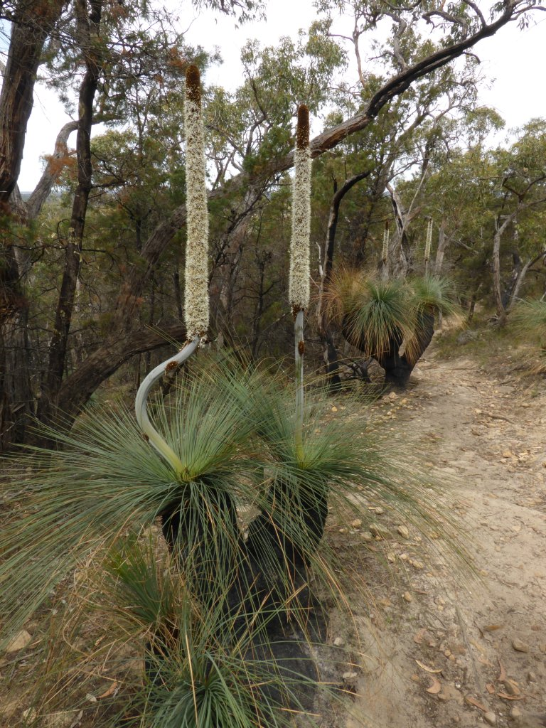 lots and lots of grass trees