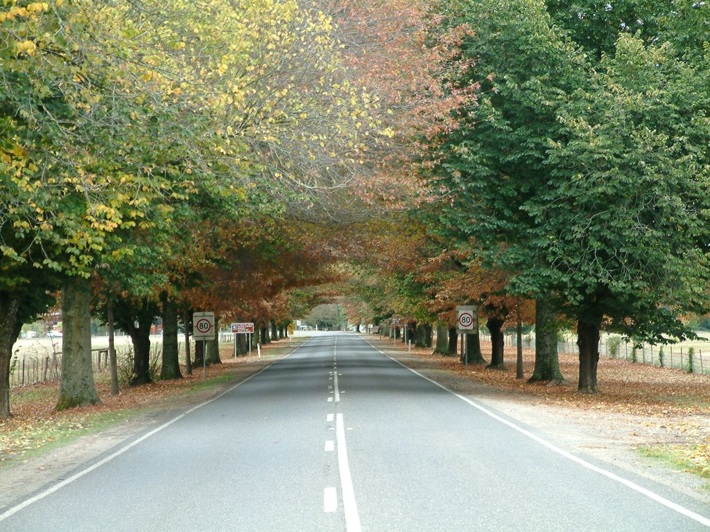 Flashback photo: The Great Alpine Road coming into Bright in autumn.