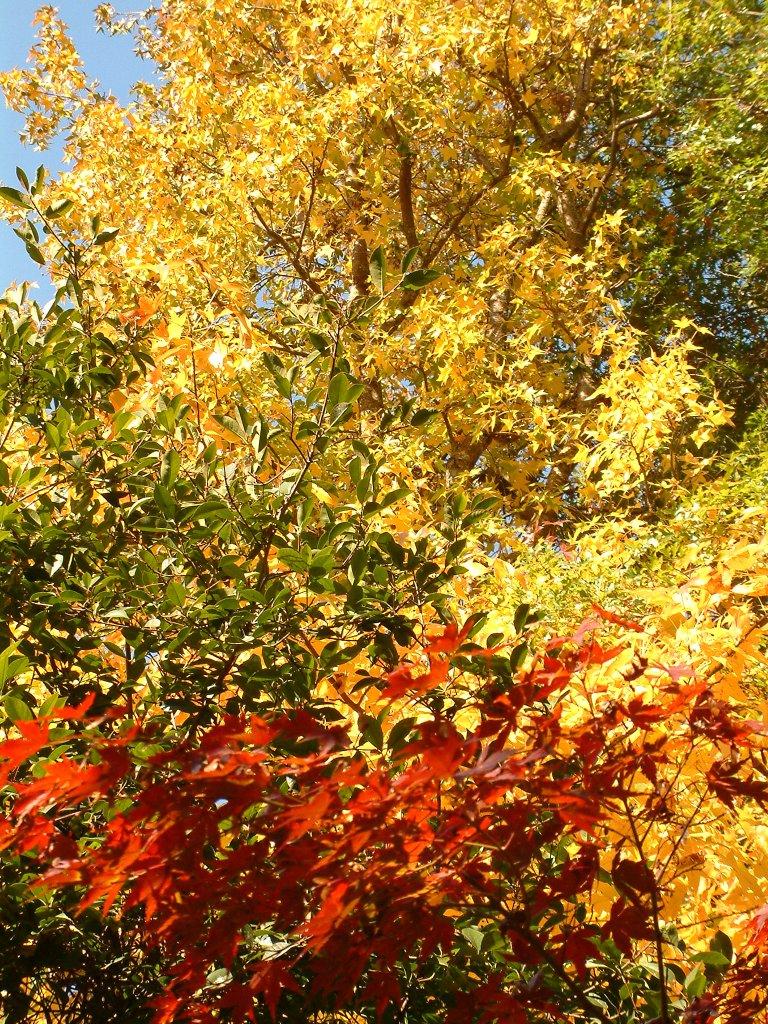 Flashback photo: autumn colours at Bright