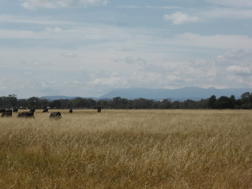 View from Milawa, looking up at Mt Buffalo in the distance.