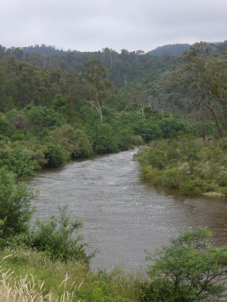 Tambo river. Up fairly high due to a lot of rain.