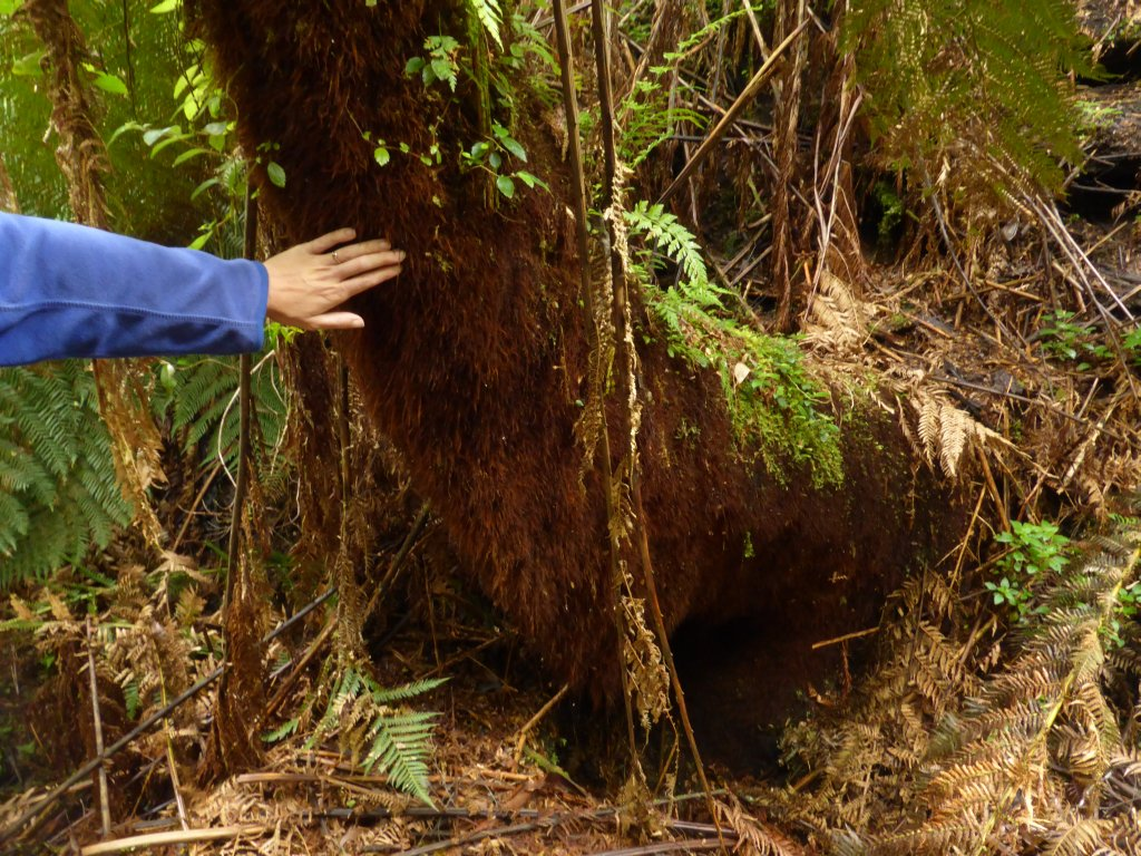 hairy tree trunks